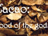 Cocoa – Aliment for Gods